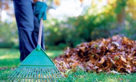 During fall you can rake leaves in your lawn and your neighbors lawns