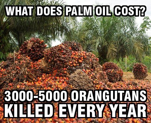 So what is palm oil? Well it's a cooking oil that's in almost every thing nowadays.
