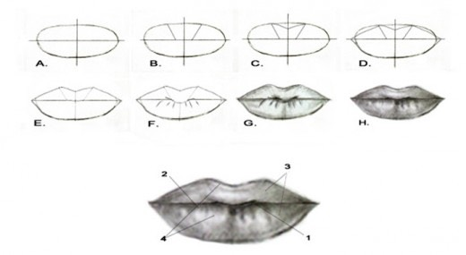 How To Draw Lips For Beginners