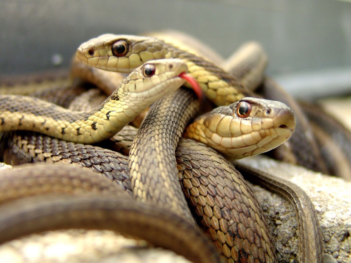 The top 10 deadliest snakes can be found in Australia