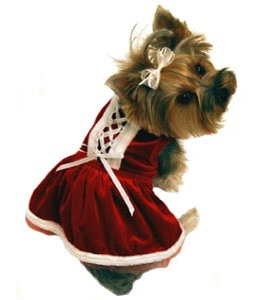 Dogs can get ready for Christmas too!