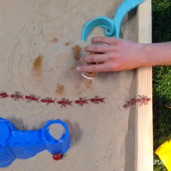 Having a problem with bugs in your child's sand box ?? Simple just add a little cinnamon !