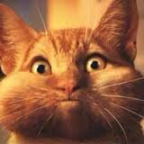 Hold your breath like the funny kitty!!!!! Look at em, he's adorbs!