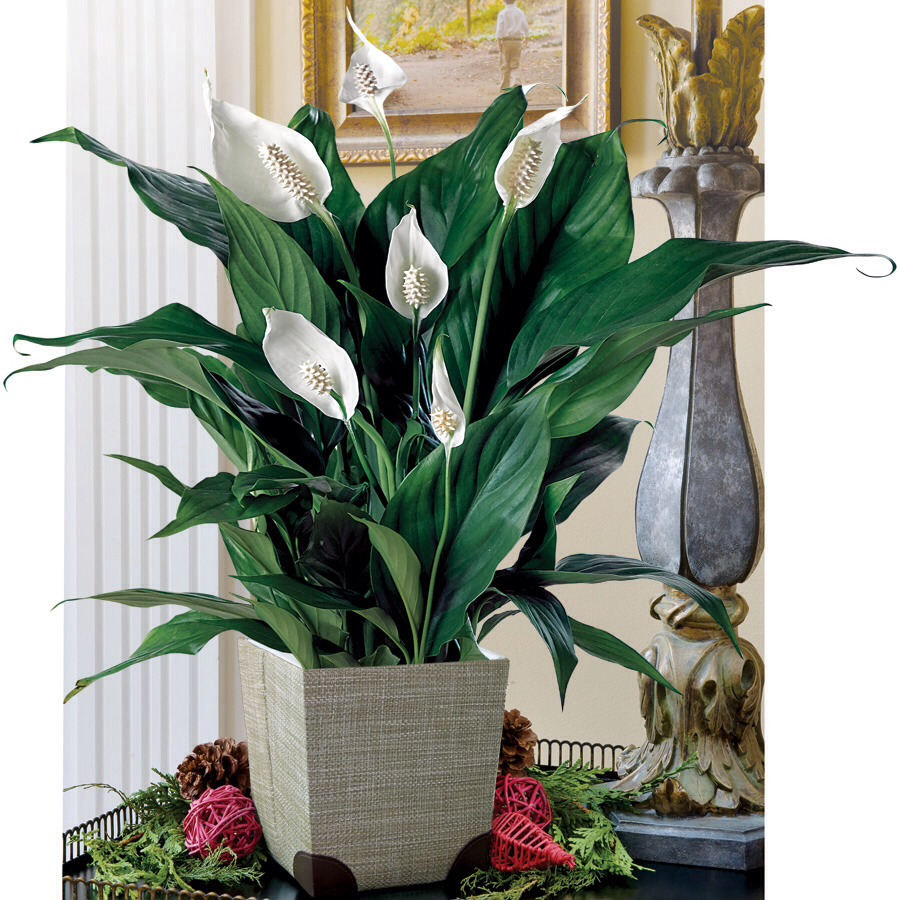 Plants are known to reduce stress hormones and are great in a working environment