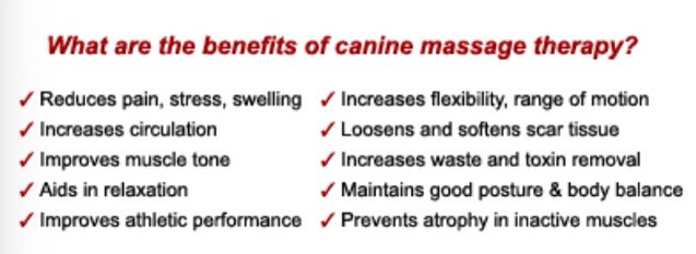 There are so many benefits to massaging your pup. My baby girl practically passes out after her massage. Here's a link on some techniques. http://dogtime.com/massage.html
