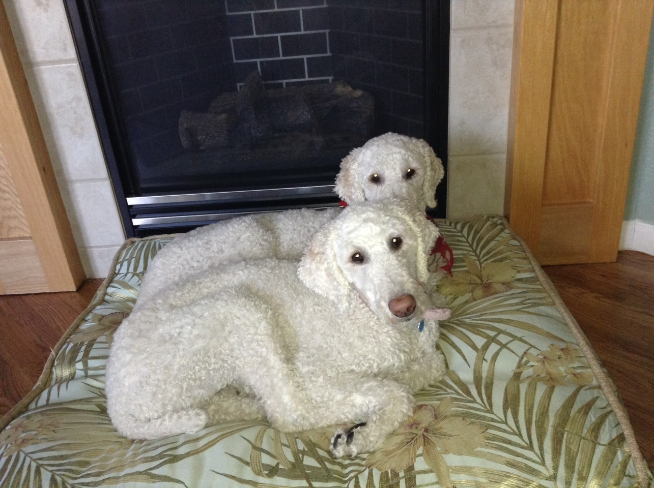 Snuggling on their bed