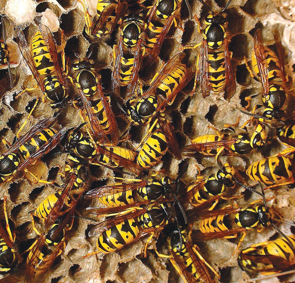 Wasps can be such a pain, but why let them bother you when you can instantly kill them using just 1 ingredient!!