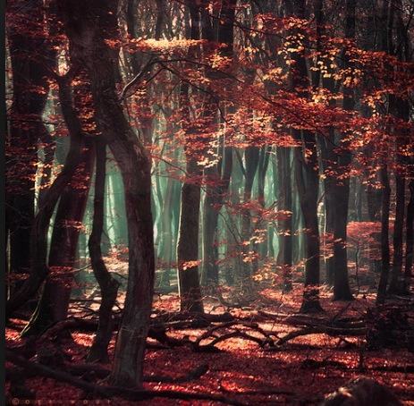 Mystic Forest, Netherlands