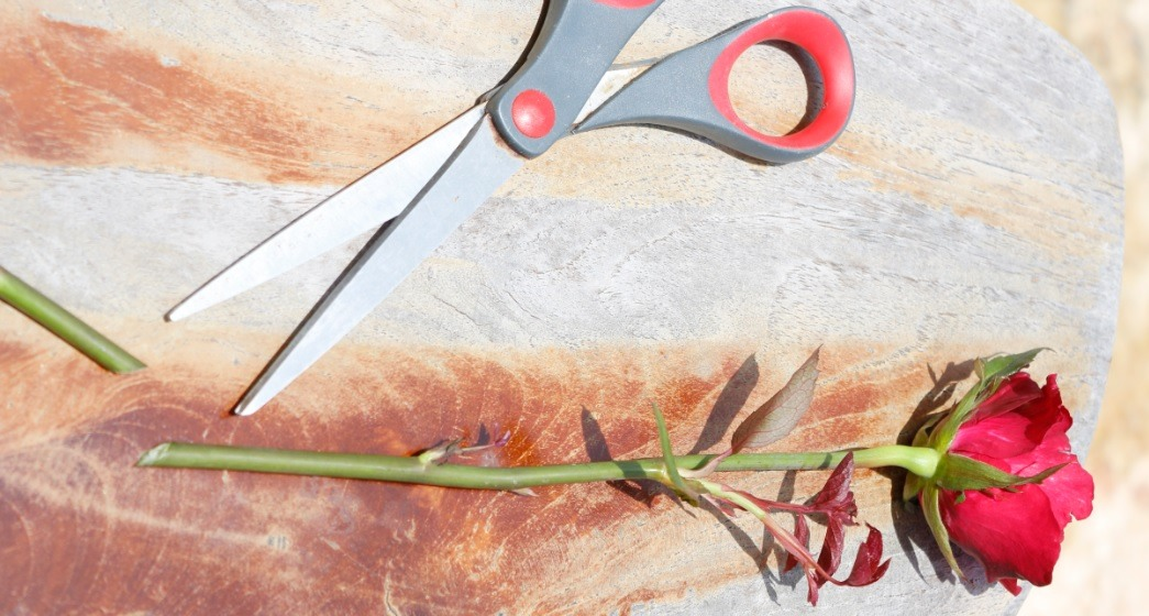 Now you will want to get some gardening scissors that have a good cut on them. Now just take off from the bottom of the Rose; either 1 or 2 inches, in the next step you will see why...