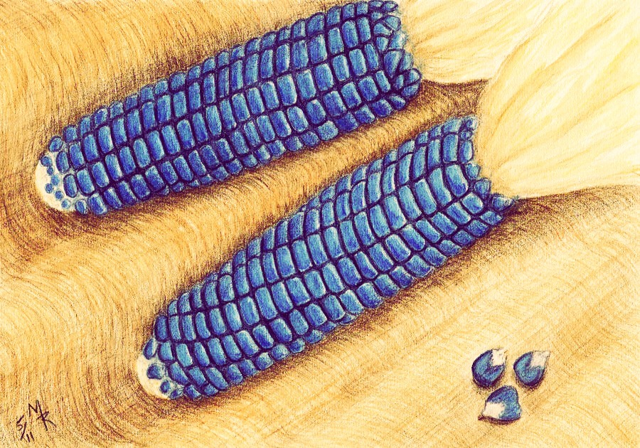 Blue corn has been used by Native Americans for years. Not only in food, but ceremonies. Also, for purifying the skin & rid the body of impurities.