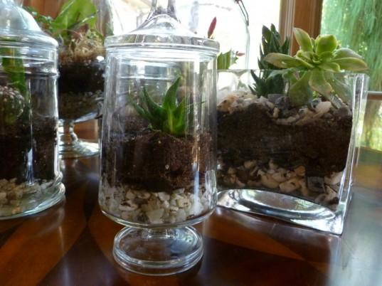 Terrariums are really in right now, and they are super easy to make.