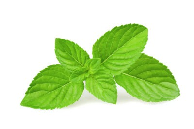8. Mint Mint contains several volatile oils that promote collagen in the body. It helps maintain an even skin tone and makes skin glow with health. Ways of usage........