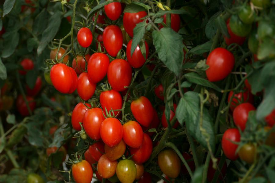 You'll have the most success with small varieties of tomatoes and peppers such as cherry/grape tomatoes and chiles or banana peppers