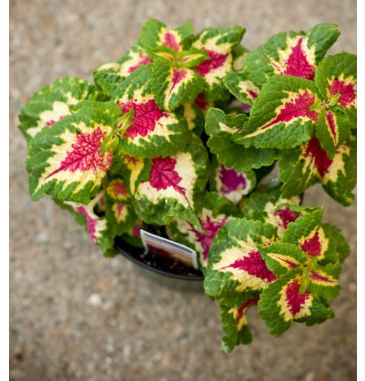 Low Maintenance Landscaping Ideas For A Stress Free 2018: 10 Colorful Low Maintenance Plants For Window Boxes By Jo