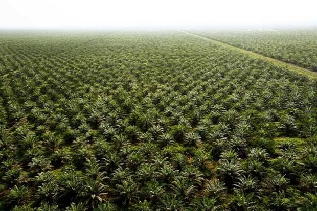 Why give up palm oil? Count to ten...