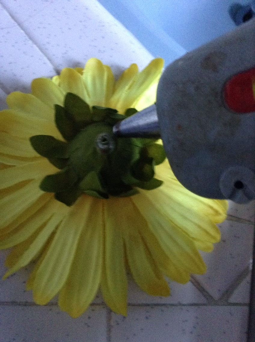 Use the hot glue gun & put glue on the end of the flower .