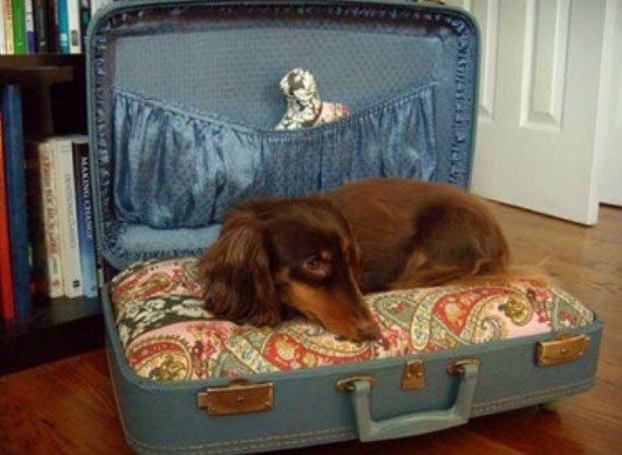 Suitcase Dog Bed Turn an old suitcase into a dog bed with some pillows and toys.