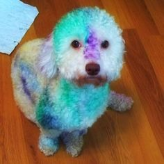 You can also color your pet😊
