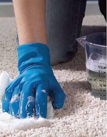 Shampoo carpets...