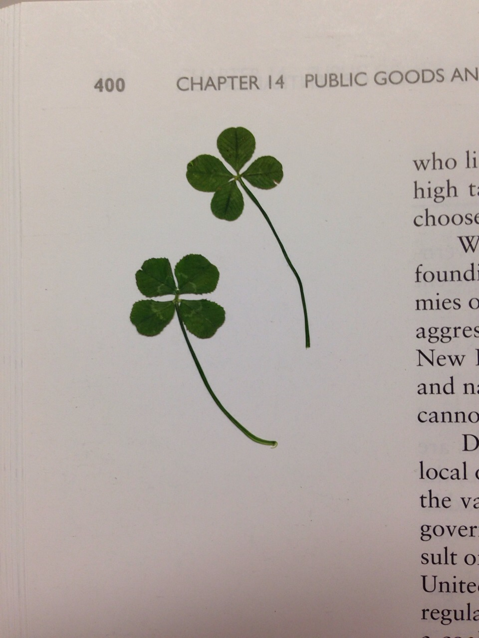When you find one, press it in a textbook on a page you'll remember, so it dries flat. Even better, give it to a friend or a stranger to share your luck and brighten someone's day.