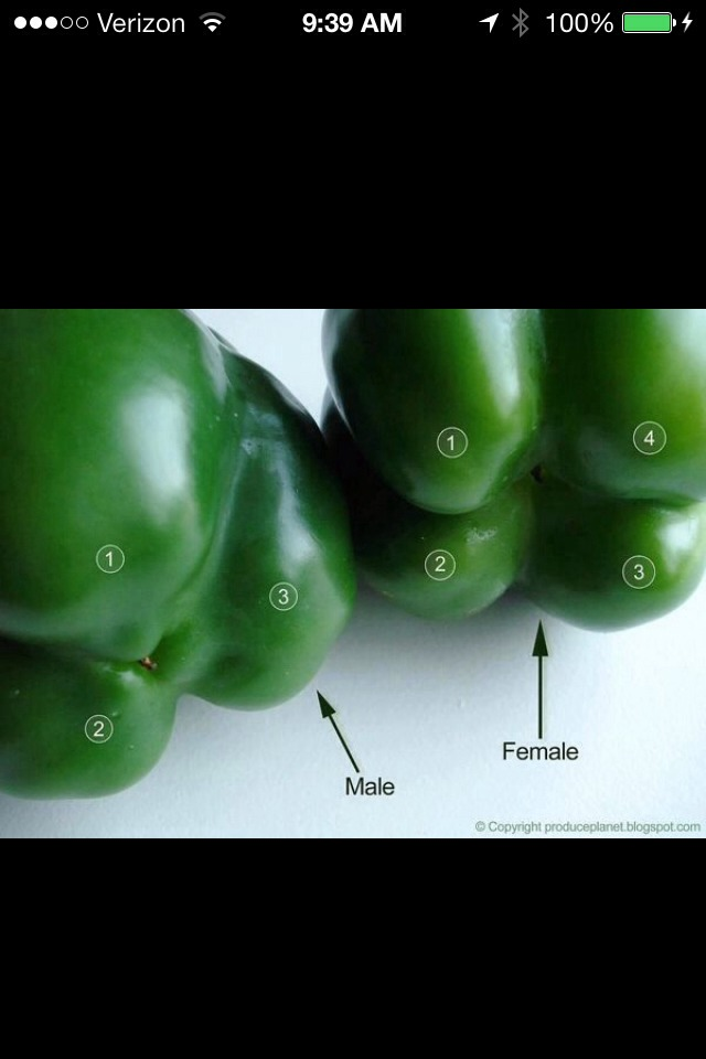 The male pepper has no/less seeds.