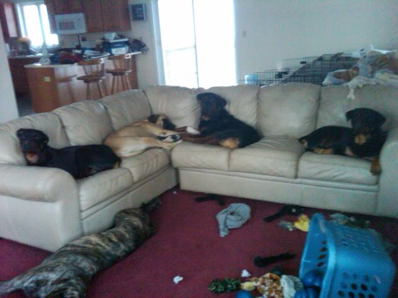 Use an old blanket or cover to cover up your couches to stop your dog from making your couches dirty,messy.