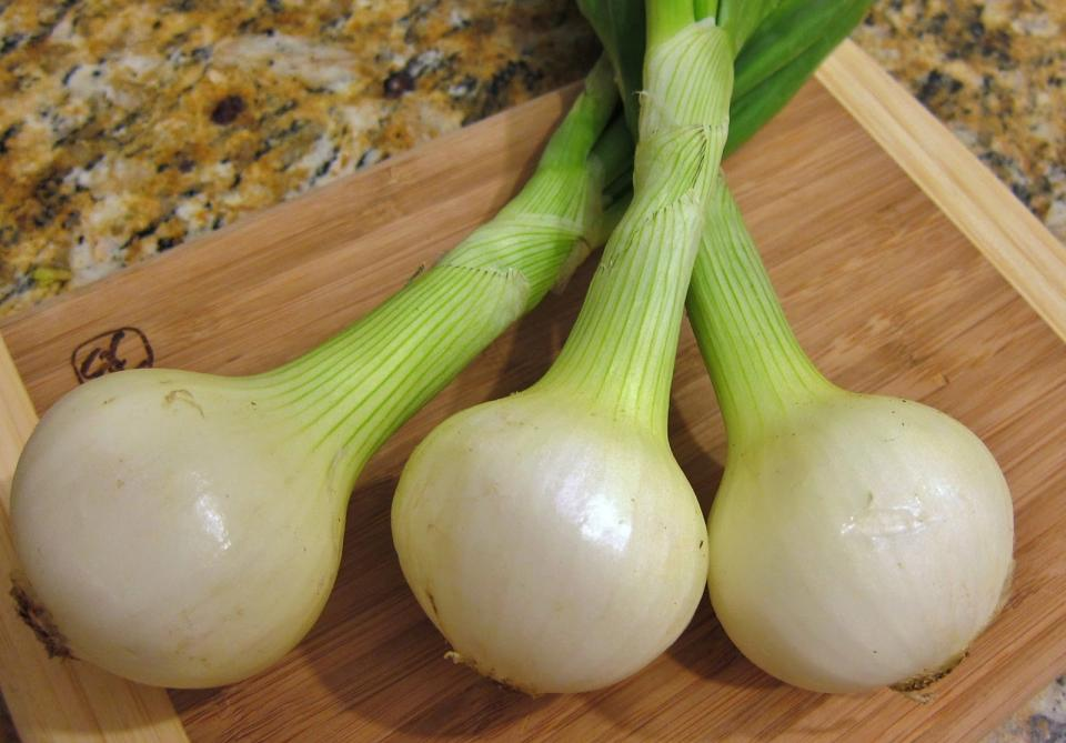 green onions will also grow rapidly with only a few inches of root and a cup of water, changed daily. Though you can continue regrowing a few times, you might want to consider eventually transferring to dirt if you want a heartier, healthier plant.