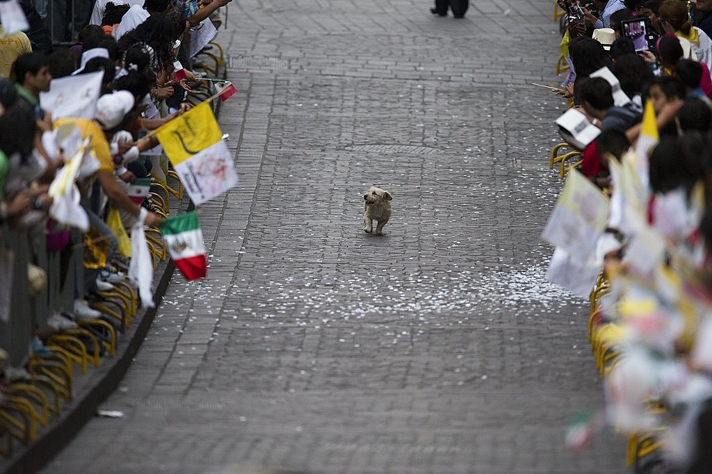 This little dog thinks this parade is just for him!