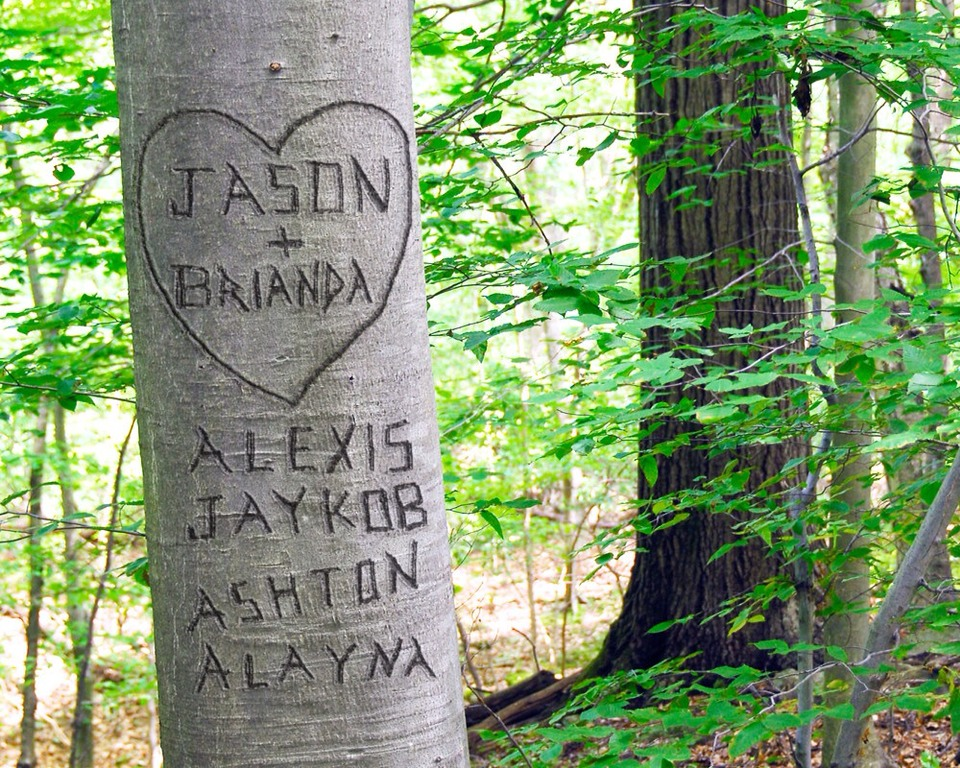 23. Carve your names in to a tree