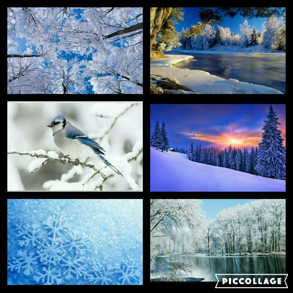 Beautiful things of the Winter Season