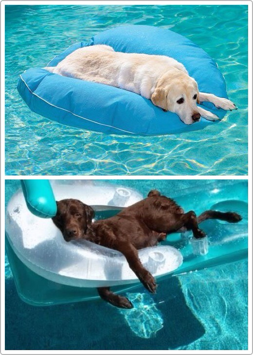 9.Dog Pool Float and Lounger Every dogs needs a pool float. Look at this. $69.50