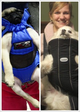 36.Doggie Bjorn Similar to a baby sling, the doggie Bjorn acts like a front backpack to carry your dog around. Just make sure he is breathing from time to time. $46.80