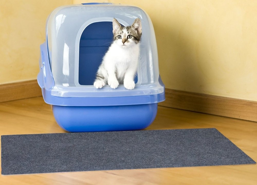 how do you keep your cat from pooping on the floor