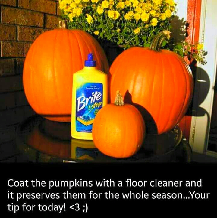 coat the pumpkins in floor cleaner and it will preserve them for the whole season!