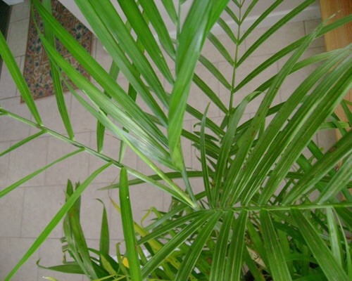Bamboo palm This small palm thrives in shady indoor spaces and often produces flowers and small berries. It tops the list of plants best for filtering out both benzene and trichloroethylene. They're also a good choice for placing around furniture that could be off-gassing formaldehyde.