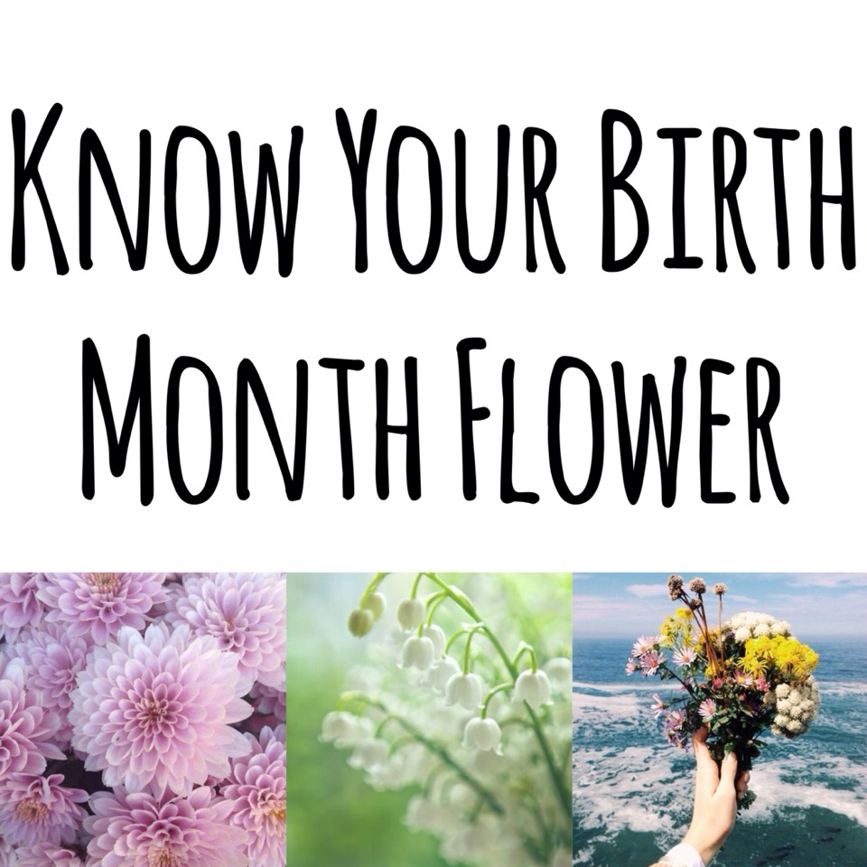 Musely know your birth month flower month flower meaning january carnation or snowdrop love or friendship in hard times izmirmasajfo Images