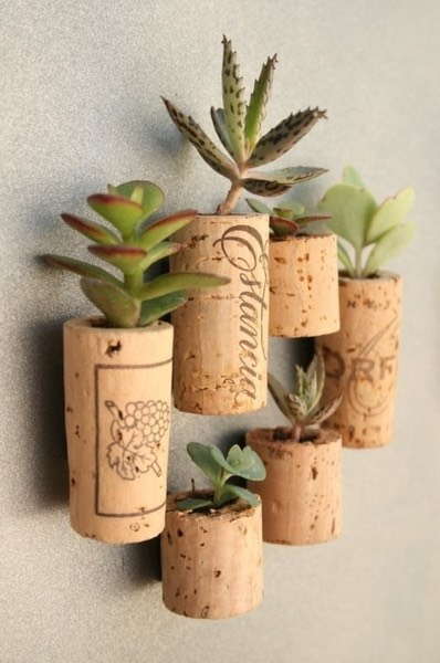 Use pretty wine corks to make planters for tiny succulents. Put magnets on them and hang them on your fridge