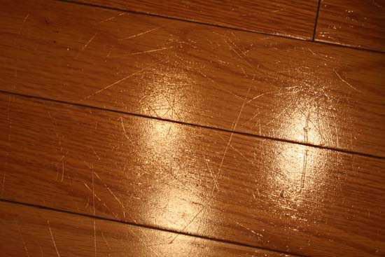 Awesome Claws Hardwood Floors Meze