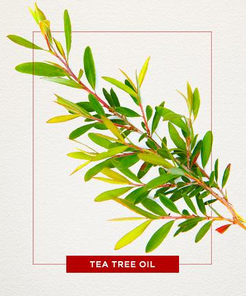 Tea tree oil is great for fighting breakouts! It kills the yucky bacteria in our pores to prevent acne from happening.  But be sure to test it out first on your hand, as this product does come from a natural plant and may or may not be allergic to it! :)