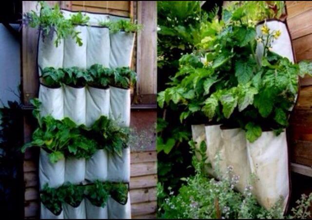 Hanging shoe racks make great hanging herb gardens!