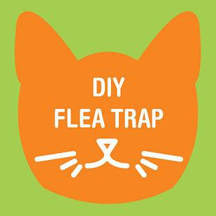 7. PROBLEM: I can't get rid of the fleas in my house.