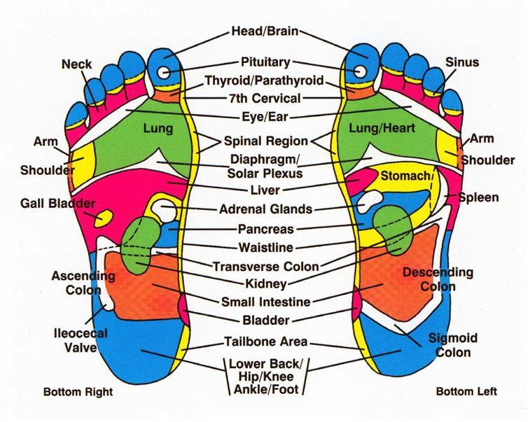 The bottom of your feet are said to be linked to your internal organs. Parts of the feet have a corresponding link to another part of your body.