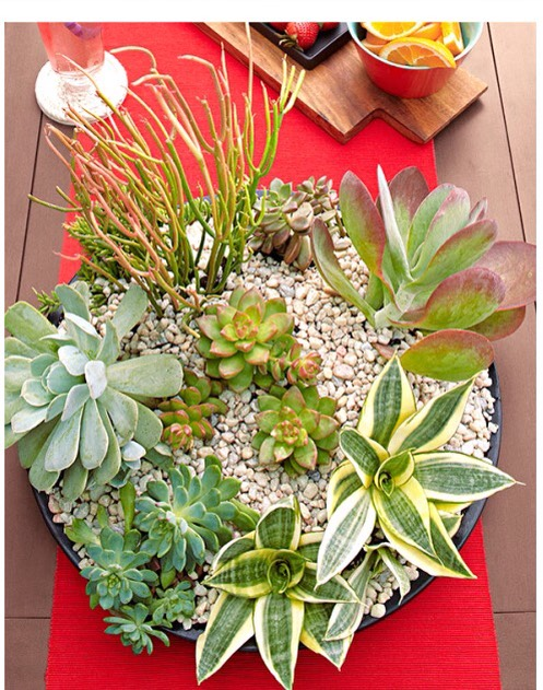 Center Of Attention  With its striking array of succulent plants, this centerpiece is also a conversation piece. Just spray-paint a terra-cotta saucer in Valspar Dark Night, and the. Fill it with soil, plants, and pebbles.