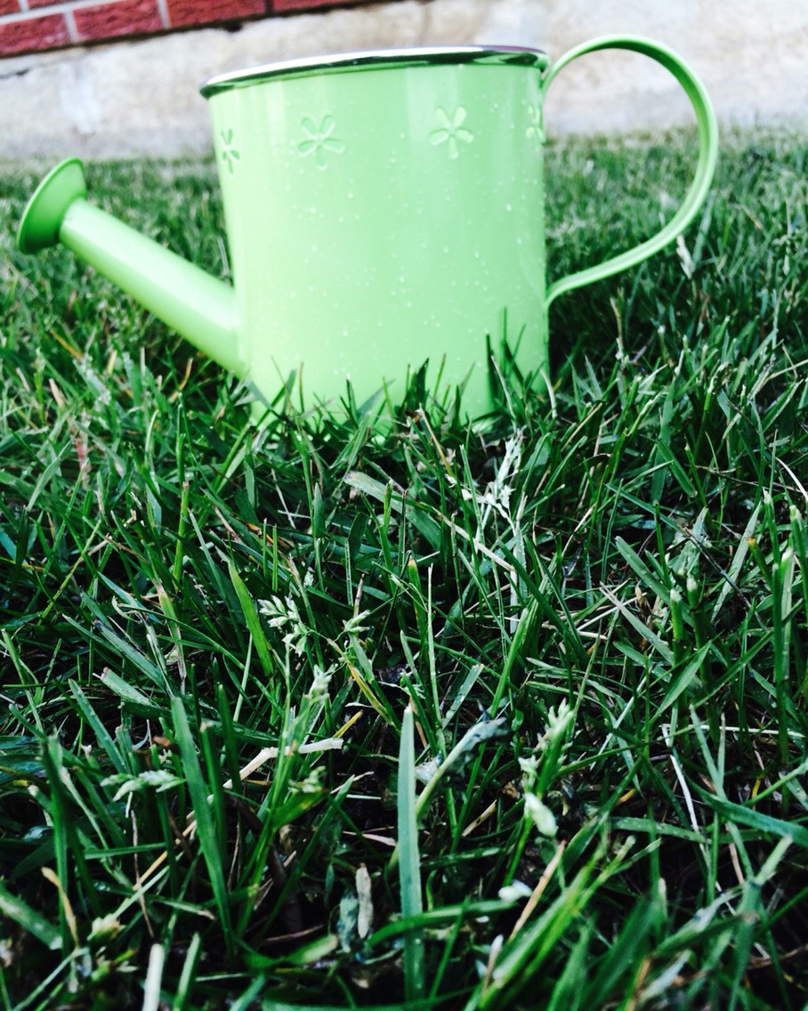 You can take a photo of a random (outdoors) item on the grass! 🌾