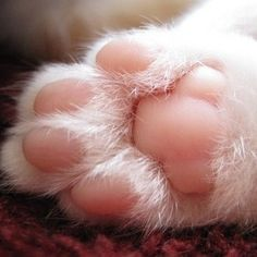 While getting your cat used to this, gently squeeze the toe pad. If your cat runs away, let them go, and try it again another day. If you have an older cat that isn't used to their feet being touched, it'll take time.