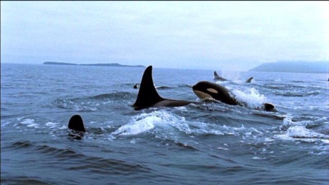 They belong Here!! FREE  Www.blackfish.com