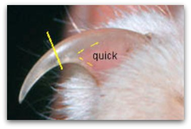 When you extend their claw, you can see what is called the quick. DO NOT CUT THIS. they have feeling in it, and if cut, will bleed. Think of cutting too far up on your own nail. You'll cut away from it. just a little bit of the sharp part.