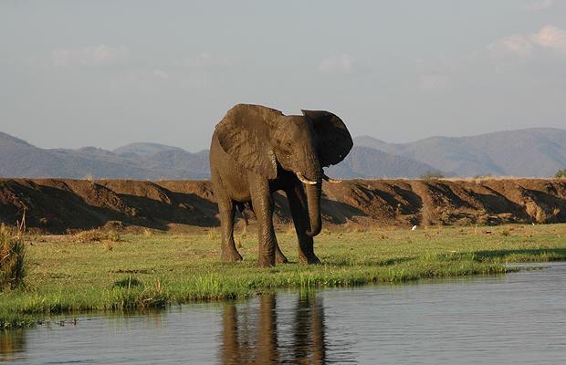 Zambia.   Africa.