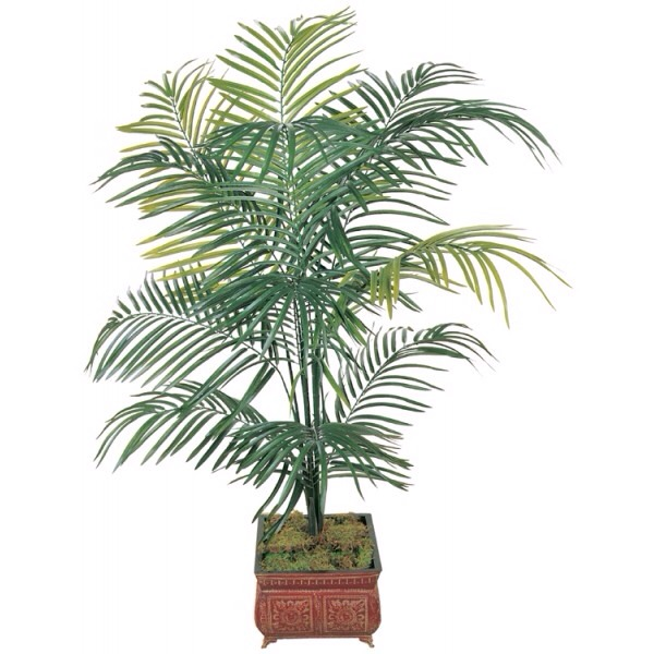 Areca Palm   The ideal plant for the living room or office.  It produces more oxygen than the average plant, which helps to keep you alert and focussed. It also removes xylene and toluene from the air.