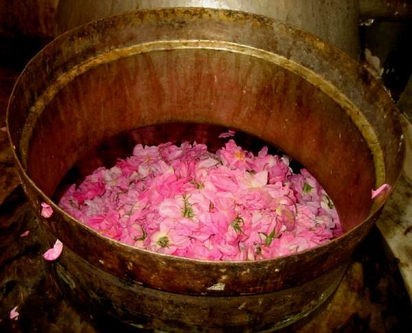 What You'll need for a Rose Toner: Organic roses &/or petals Pure filtered water Witch Hazel Vitamin E (optional) A Pinch of sea salt (optional) A drop of glycerin (optional) Rose essential oil (optional) Rose hips (optional)